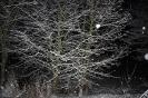 Schneebild 1 (30.1.2019)